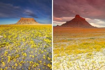 blooming-desert-badlands-utah-cover-216x144.jpg