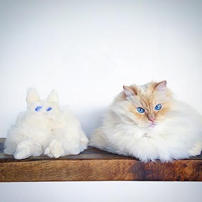 Эта кошка словно облако