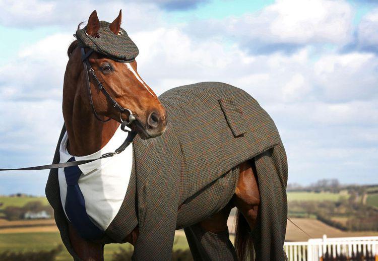 Конь в твидовом костюме-тройке