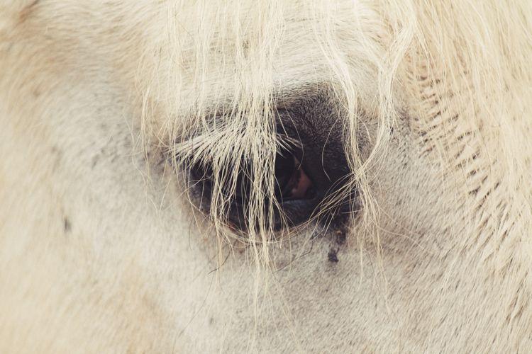 Печальные глаза животных зоопарка