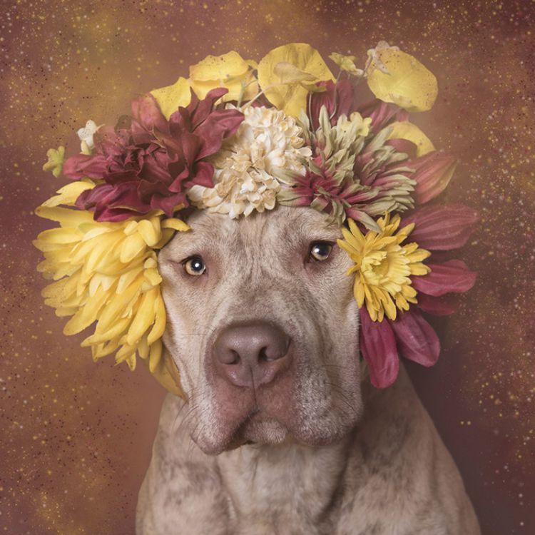 «Сила цветов» спасает питбулей от эвтаназии