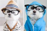 Тоби — икона стиля среди собак