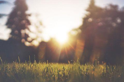 «А счастье всюду...»