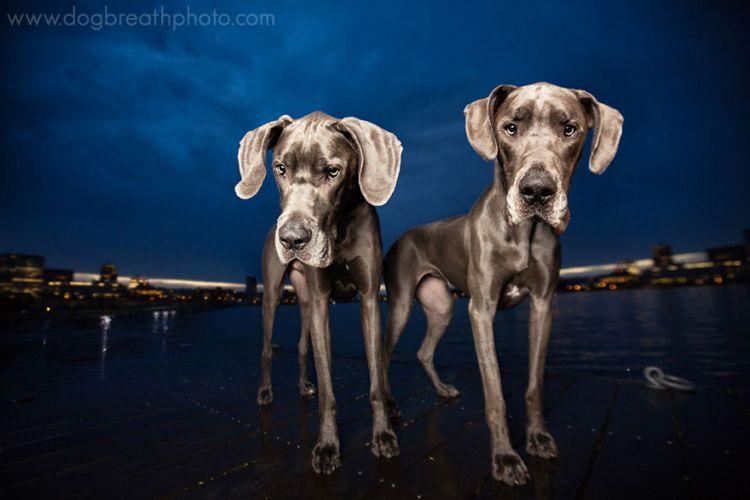 Невероятно эмоциональные и позитивные портреты собак