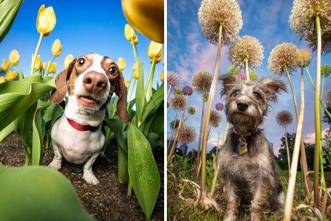 Невероятно эмоциональные и позитивные фотографии собак