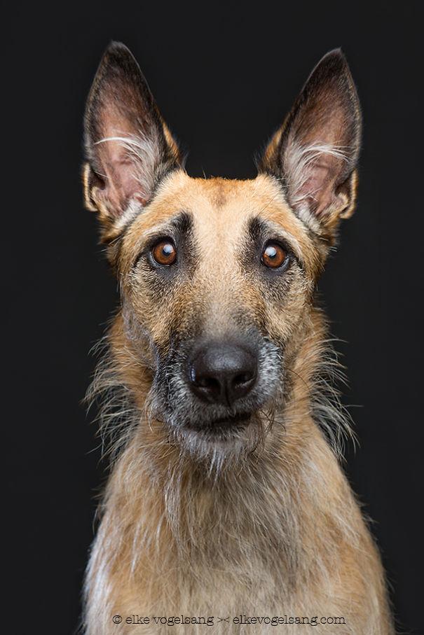 Собаки, которые сомневаются в адекватности фотографа