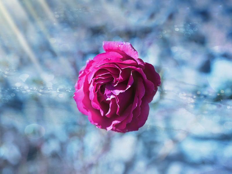 Помните, что не силой и страстью измеряют любовь