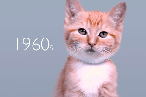 Эволюция кошачьей красоты за 100 лет
