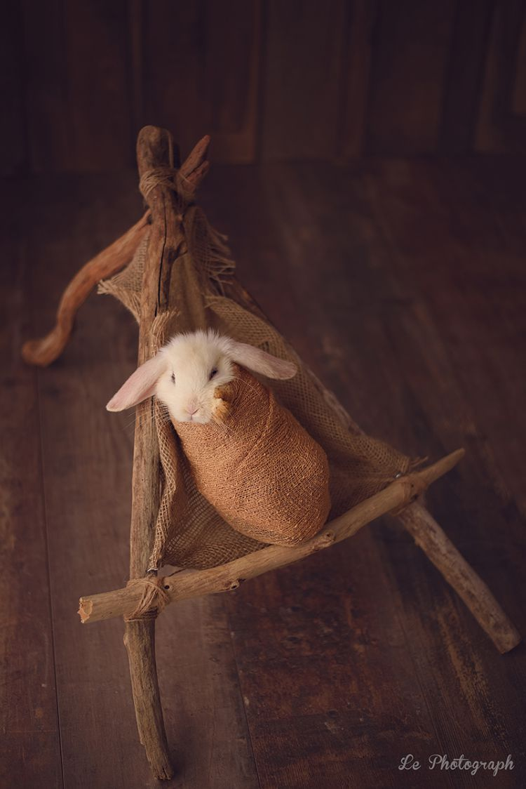 Фотосессия новорожденного кролика