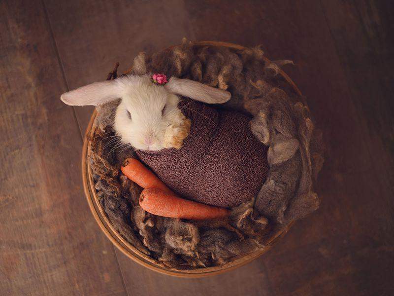 Фотосессия новорожденного... кролика