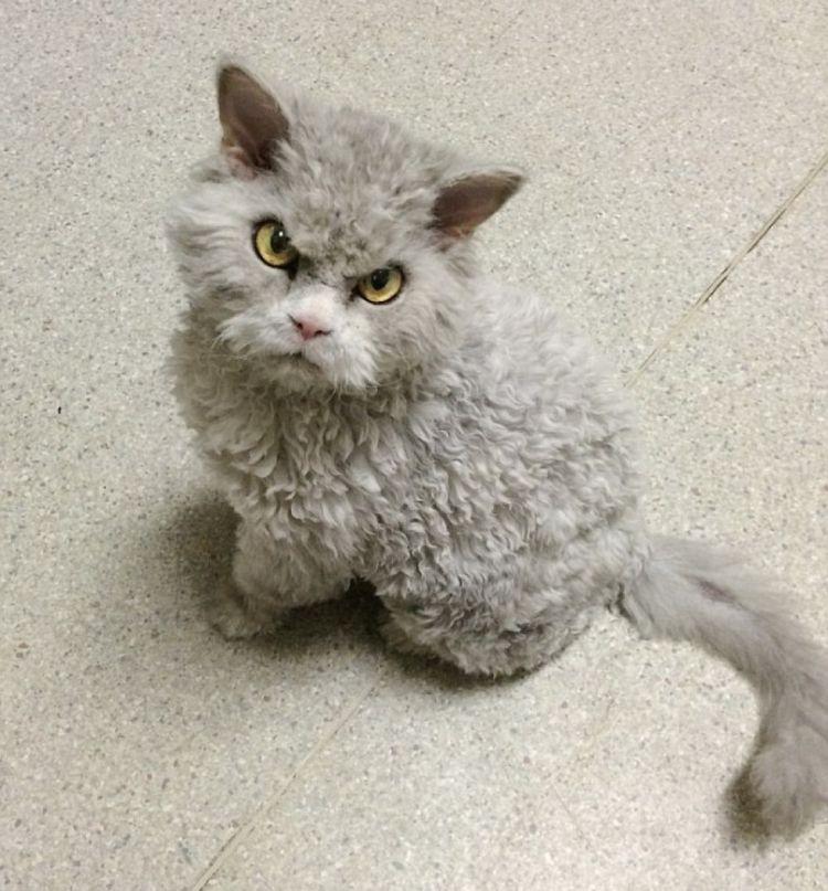 Хмурый кот Альберт видит вас насквозь