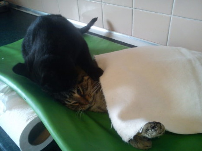 Кот-медбрат из польского приюта для животных