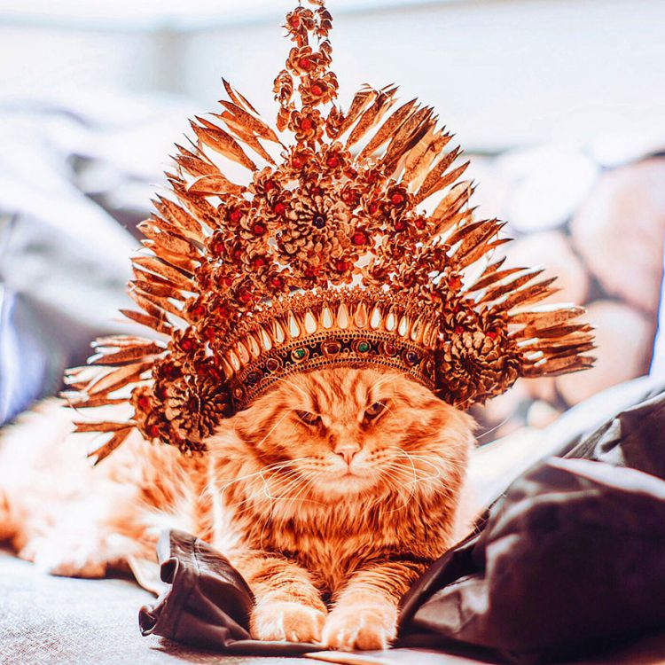 Величественный Котриарх, или просто Котлета