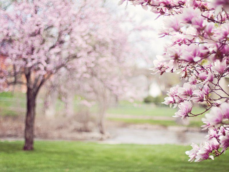 «В тот месяц май, в тот месяц мой»