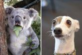 Животные, которые не могут скрыть удивления