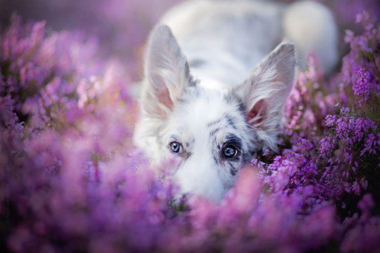 25 совершенно волшебных портретов собак