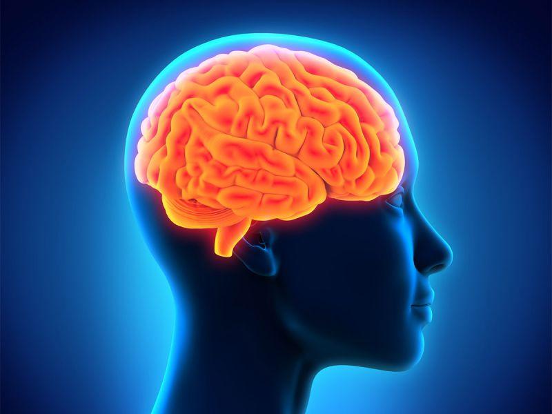 Эти 5 фактов о мозге способны повлиять на вашу жизнь