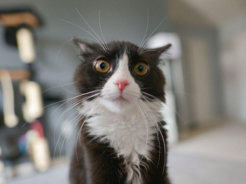 «Кот Марат не уверен в завтрашнем дне»
