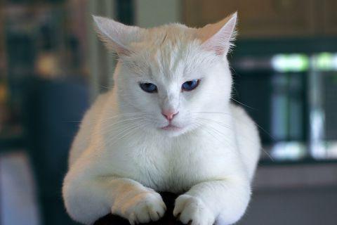 «Маленькая глупая белая кошка знает, что такое любовь»
