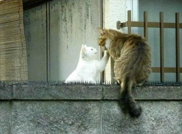 Настоящая любовь не знает преград