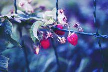 pochemu-my-razuchilis-poluchat-udovolstvie-cover-216x144.jpg